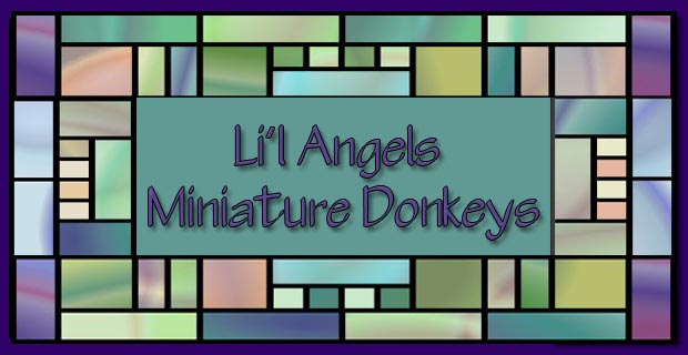 Welcome to Li'l Angels Miniature Donkeys